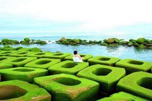 Phú Yên – Tôi Thấy Hoa Vàng Trên Đồng Cỏ Xanh