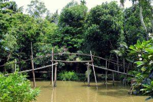 Kinh nghiệm du lịch miền Tây sông nước