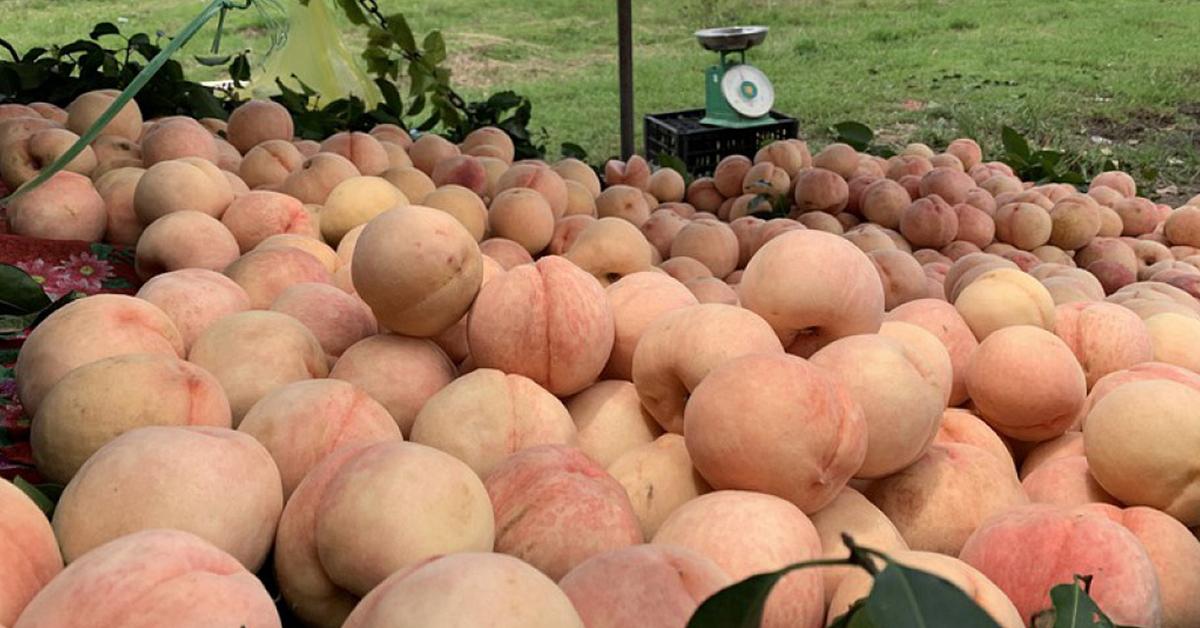 Trái cây, rau củ Sapa phải kể đến đào, mận mọng nước, ngọt thanh